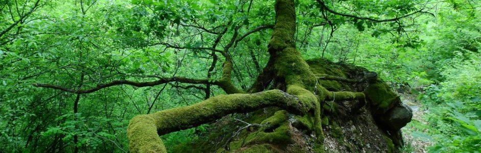 Šume u Srbiji